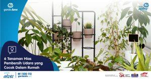6 Tanaman Hias Pembersih Udara yang Cocok Dalam Rumah